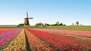 Chuyển hàng từ Hà Lan về Việt Nam